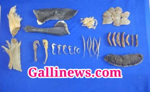 Custom Official Seized Ocean Species Smuggling worth rs 7 Crore