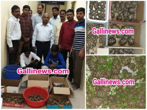 293 Star Tortoises rescued kiya Directorate of Revenue Intelligence ne 2 person arrested