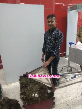 49 kg Peacock Feather seized at Delhi Airport