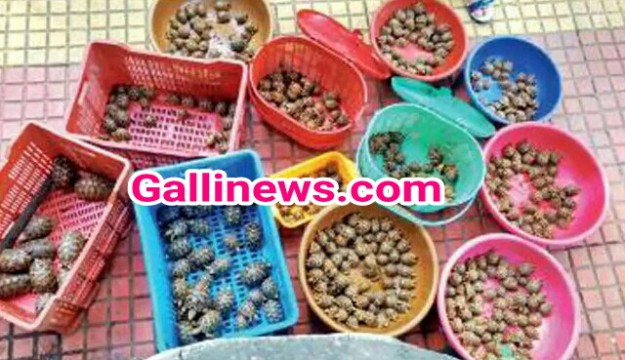 523 Star Tortoise Seize Kiya DRI And Wildlife Forest Department Ne Milkar