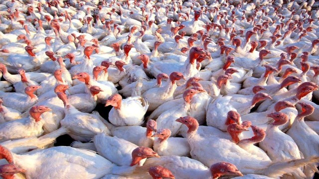 Bird Flu Confirmed in 11 States and UTs says Government