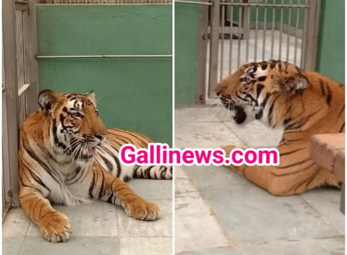 Byculla Zoo mai Tigers Nazar aayege