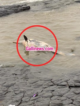 Dead dolphin found at bandstand bandra