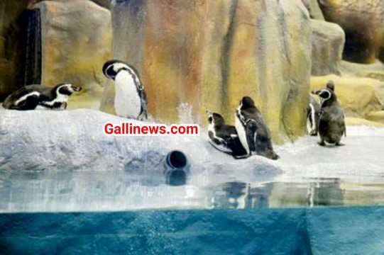 Good News From Byculla Zoo Desh ko milega pehla indian born penguine
