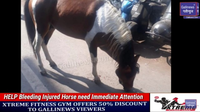 HELP Bleeding Injured Horse need Immediate Attention