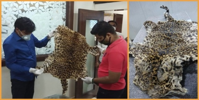 Leopard Skin ke Sath 2 arrested at Thane by Thane Crime Branch