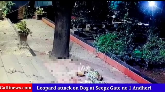 Leopard attack on Dog at Seepz Gate no 1 Andheri East