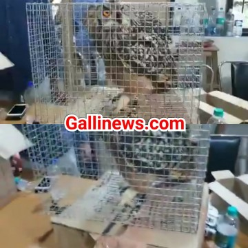 Owl Falcon Star Tortoise jaise Birds and Animals train se lane wale ko Thane Forest Department ne kiya Arrest