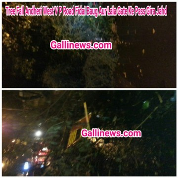 Tree Fall Andheri West V P Road Fidai Baug Aur Lala Gate Ke Pass Gira Jahd