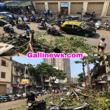 Tree Fall Dimtinkar Road Nagpada on Bikes