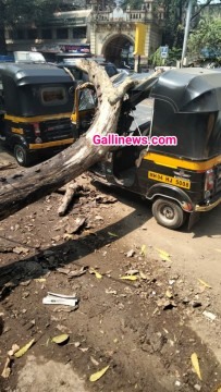 Tree Fall Down on Autorikshaw In Thane