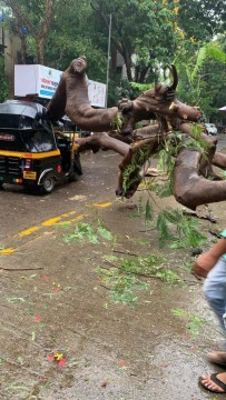 Tree Fall in Thane Driver Injured