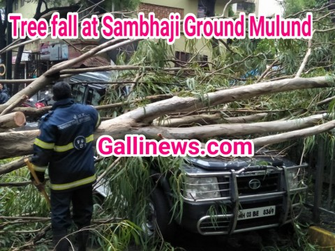 Tree fall at Sambhaji Ground Mulund