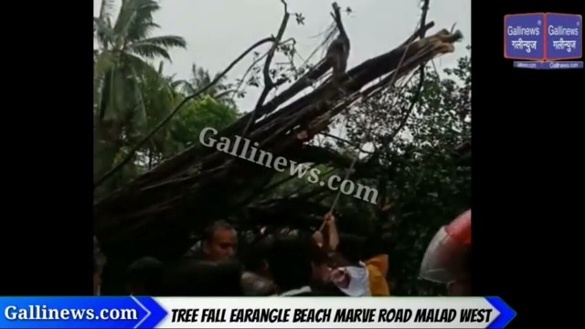 Tree fall near Earangle at Marve Road Malad West
