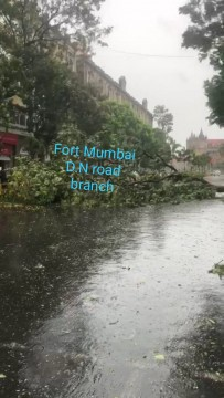 Second Tree Fall Incident Report in Whole Mumbai