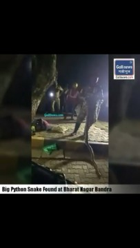 Big Python Snake Found at Bharat Nagar Bandra