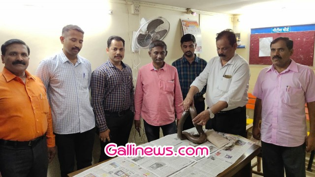 Boa Snake Worth Rs 40 Lakhs Seized  from Auto Driver By Thane Police