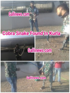 Cobra snake found at GVK At Kurla