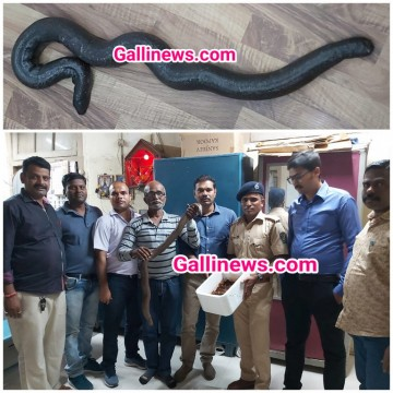2 Headed Red Sand Boa Snake worth Rs crore Ke sath 4 arrested By South Region Addl Com Spl Squad  and Colaba Police Behind Taj Mahal Hotel