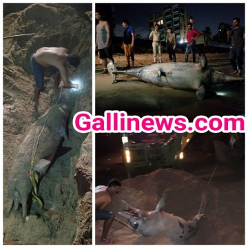 Dead Dolphine Found at Versova Beach