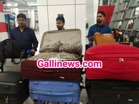 Oudh Agarwood 125 Kg and 5 liter Agar Oudh Oil Worth Rs 1 crore Seized at Delhi IGI International Airport