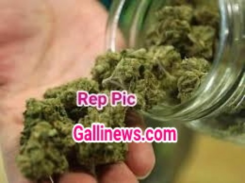 Bus stop se 3.5Kg Gaanja Marijuana Zapt by Anti Drug Department Madgaon Goa