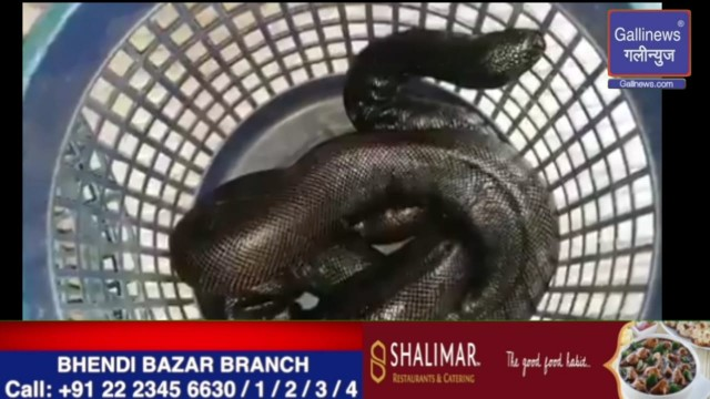 Red Sand Boa Snake seller caught Red Handed at Borivali
