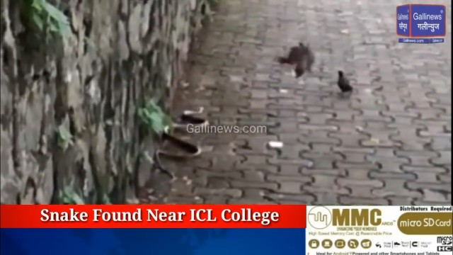 Snake found near ICL College Navi Mumbai