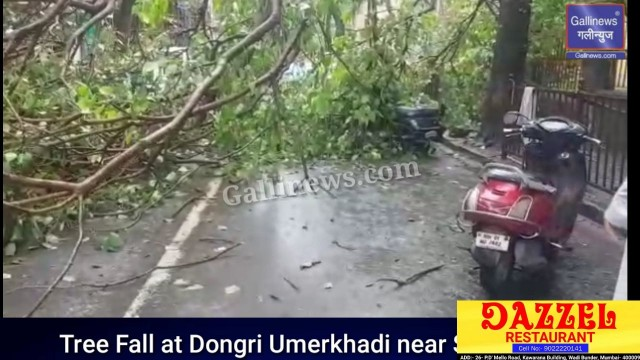 Tree Fall on 5 Bikes at Dongri Umerkhadi near St Joseph High School