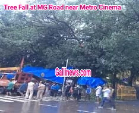 One Died and 5 Injured Tree fall MG Road Near Metro Cinema