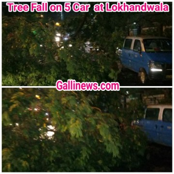 Tree Fall on 5 Car at Lokhandwala