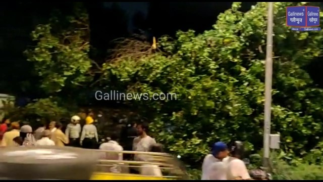 Huge Tree Fall At Rafi Ahmed Kidwai Road