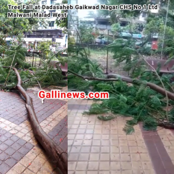 Tree Fall in Residence Building Complex at Malwani Malad