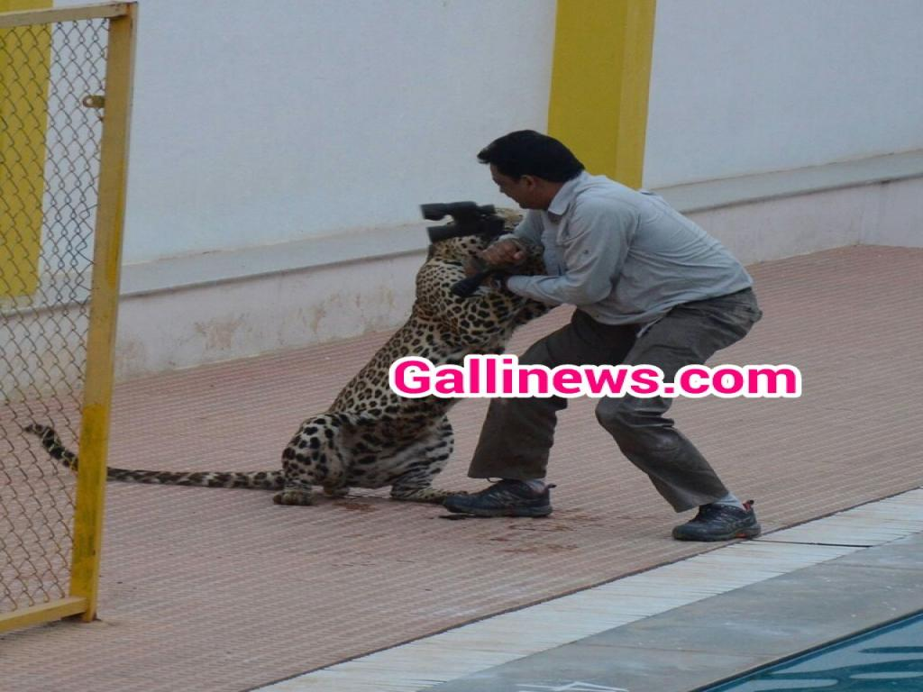 Leopard Attack in Bangaluru School